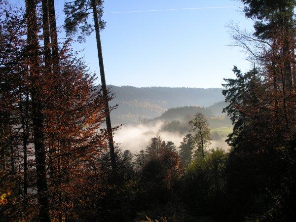 Photos prises aujourd'hui, 1er novembre ! en fin d'après-midi  (à suivre)