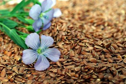 Le beau parcours d'une simple petite graine...