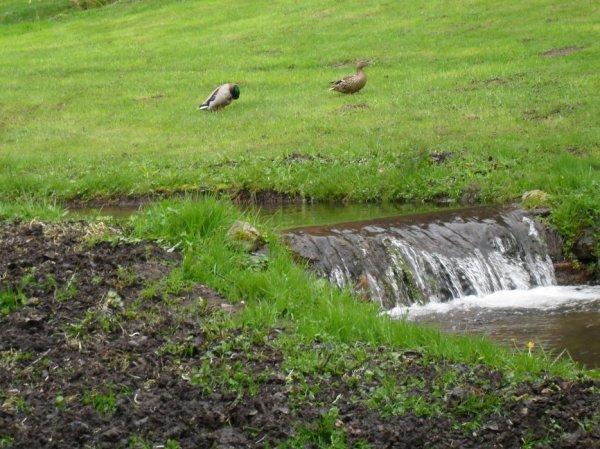Quelques photos prises ce matin, à 9 heures ... par temps de pluie