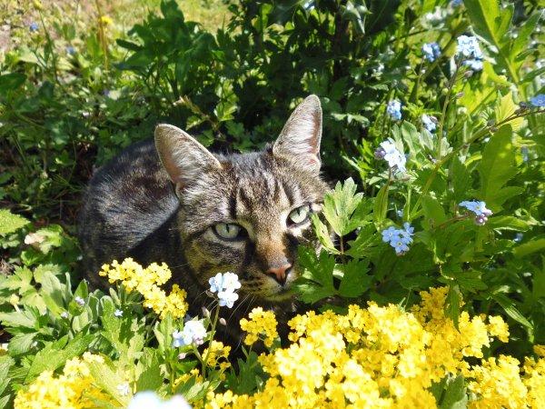 8 Août = Journée internationale du Chat