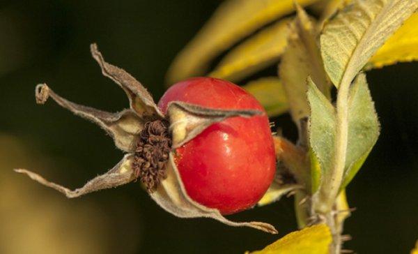 Les fruits sauvages, j'adore...