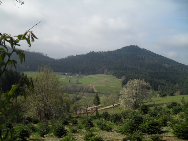 Quelques photos prises aujourd'hui au cours d'une randonnée