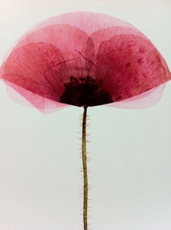 Un peu de poésie avec Julien Bouchard-Madrelle