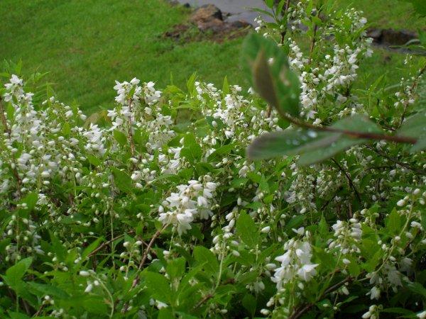 Quelques photos de fleurs et arbustes prises ce matin