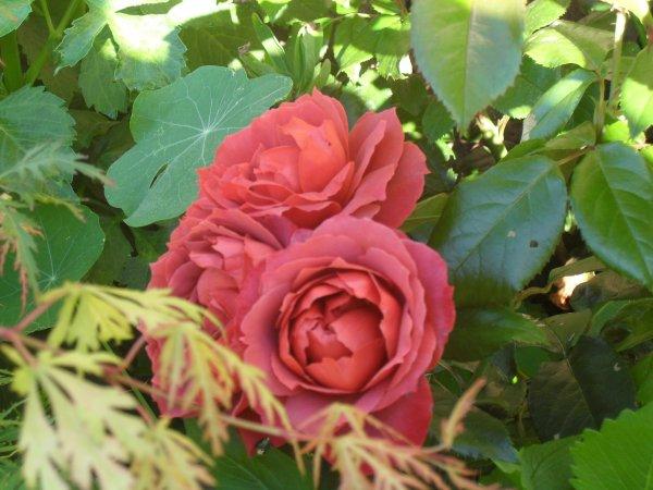 23 septembre... accueillons l'Automne avec un poème et une citation de Jules Renard !
