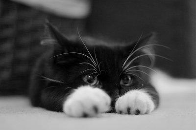""""""" Le ronronnement est le sourire du chat """""""