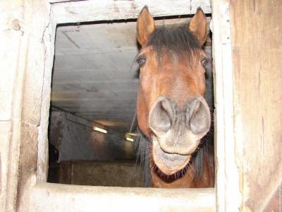 Le cheval rigolo mon sky - Cheval rigolo ...