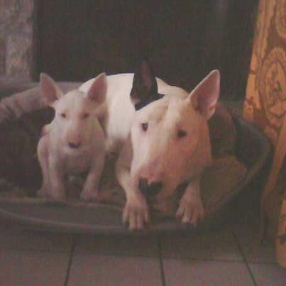 mes 2 bébés