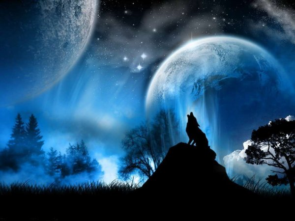 loup pleine lune