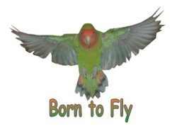 Born To Fly !!!!!!!!!!!!!!