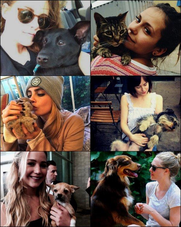 Je met cette article car pour moi c'est super important. Je suis Une inconditionnel fan des animaux et surtout des chats et je ne supporte pas la maltraitance,. Création faite par moi et disponible sur mon tumblr :)