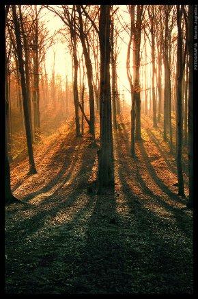Les âmes vagabondes ★ Stephenie Meyer - par Sklerijenn