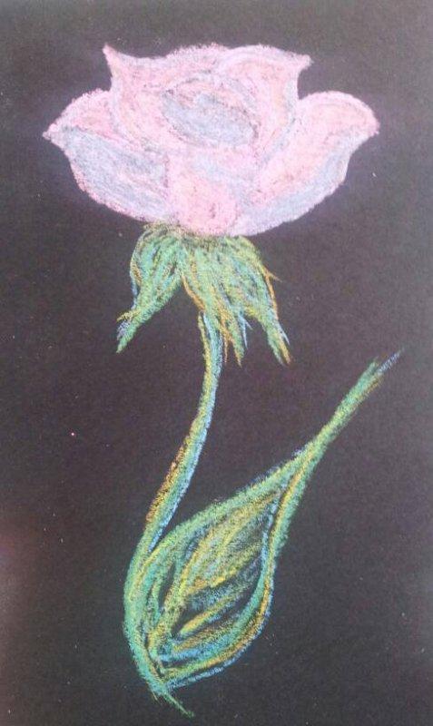 Rose à la craie