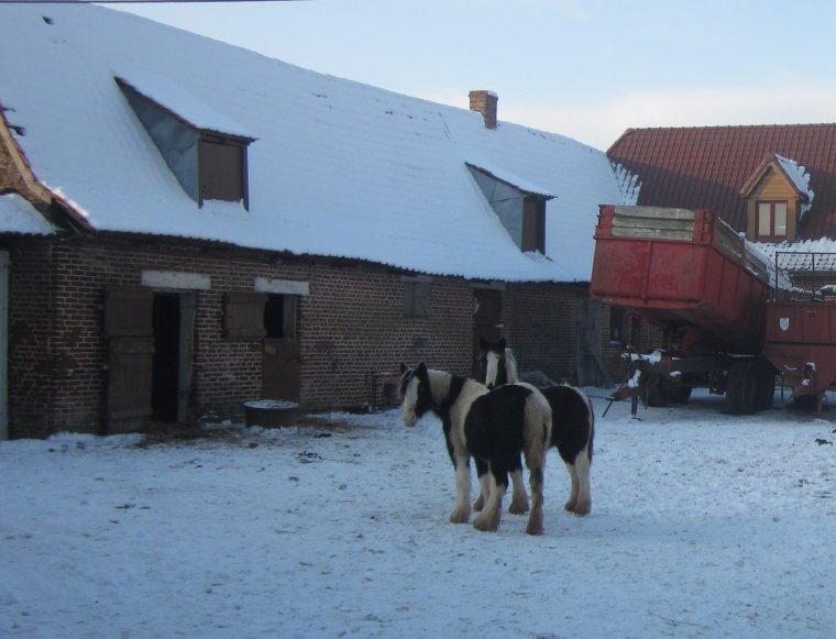 Le 17.01.2013, Première sortie dans la neige en plus!