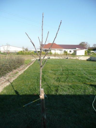 Arbres fruitiers plantés