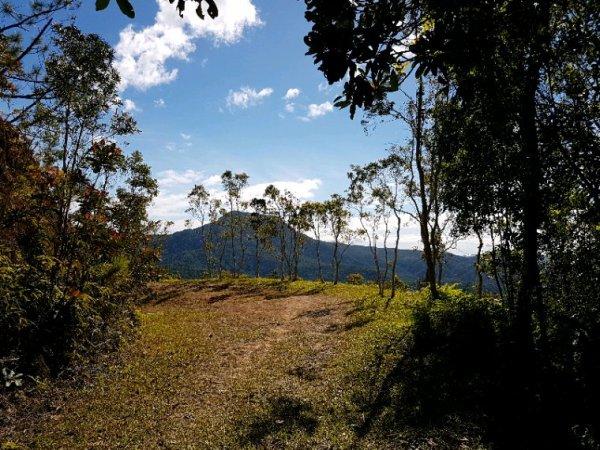 Le parc des Grandes Fougères, Farino et Saraméa