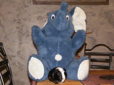 galipette et son elephant