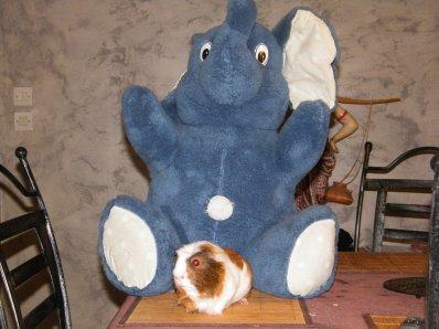 gizmo et son elephant