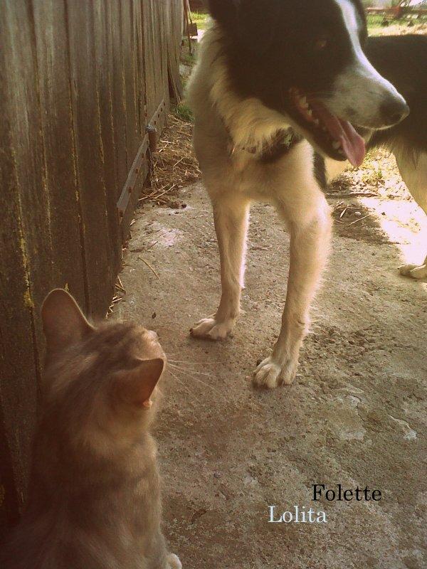 Entre chiens et chats
