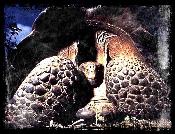 Une tortue terrestre, c'est quoi ?