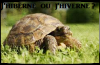 Lexique: hiBerner ou hiVerner ?