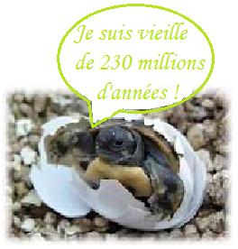 L' Histoire de la tortue terrestre...