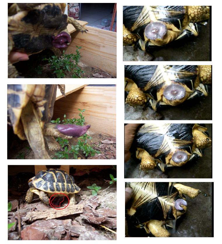vidéo de sexe de tortue