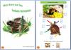 Cahier pour enfants sur les tortues