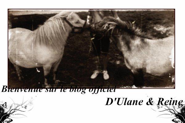 Bienvenue sur le blog de l'amour