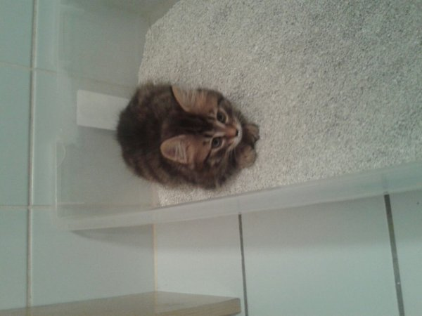 4 petit chaton a bondonné dessous un lift dans le garage pam en valais 3 son mort de noyade elle s en sort plutôt bien