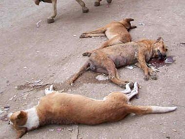 La cruauté animal.