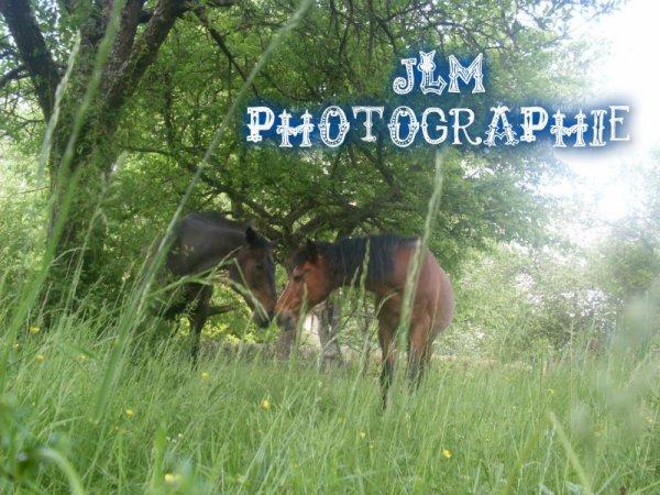 Les chevaux (l) #Deb
