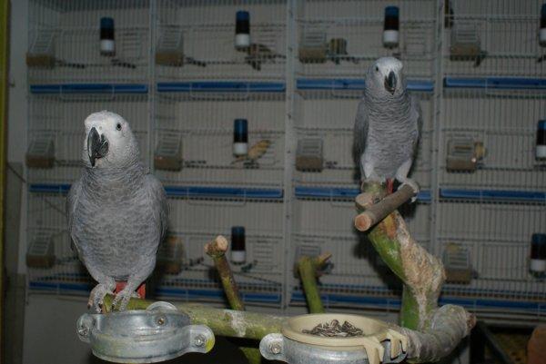 voila mon couple geis du gabon