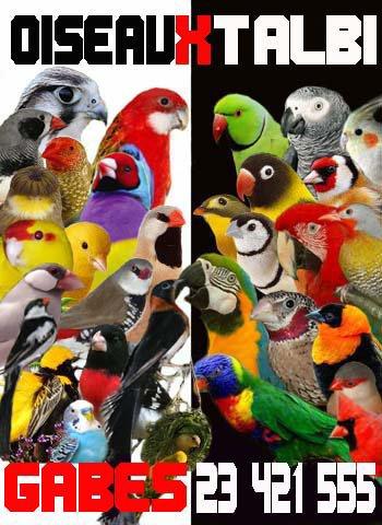 Oiseaux Talbi
