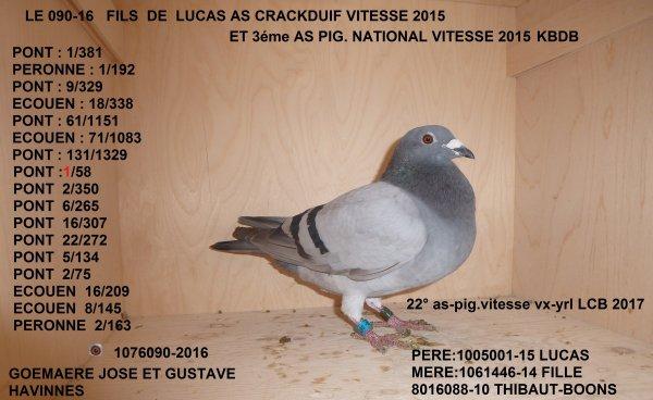 AS PIGEONS LCB 2017