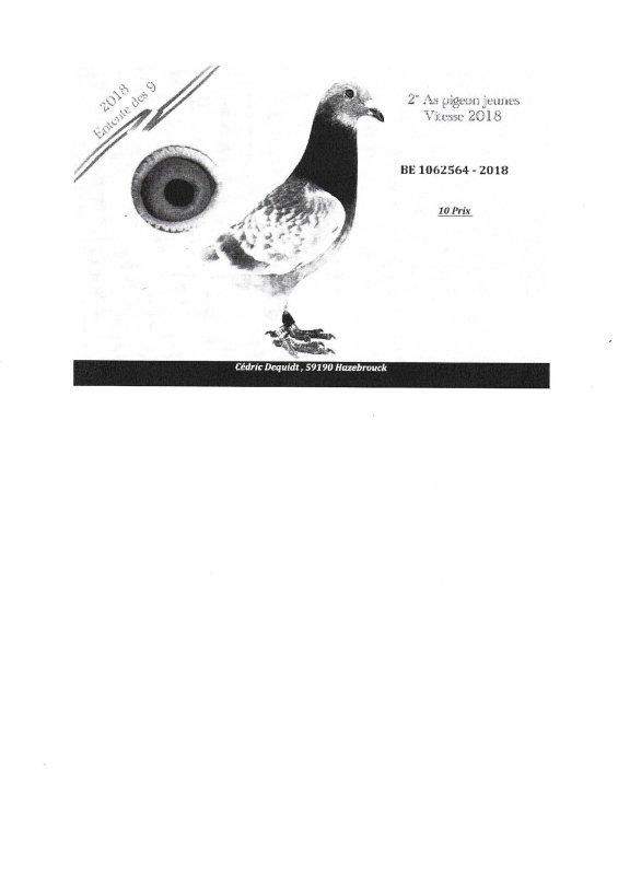 quelques résultats fournit par des amateurs en FRANCE avec les pigeons de chez NOUS