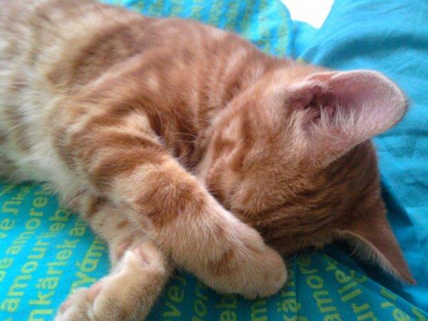 L'une des plus grande douceur dans la vie c'est de pouvoir la partager avec un chat, qui vous rendra toujours l'amour que vous lui donner.