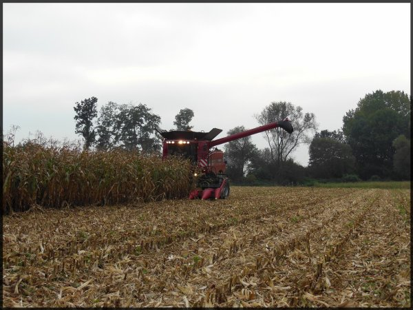 Axial-Flow 6088 - Maïs grain 2013