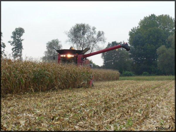 Axial-Flow 6088 - Maïs grain 2013