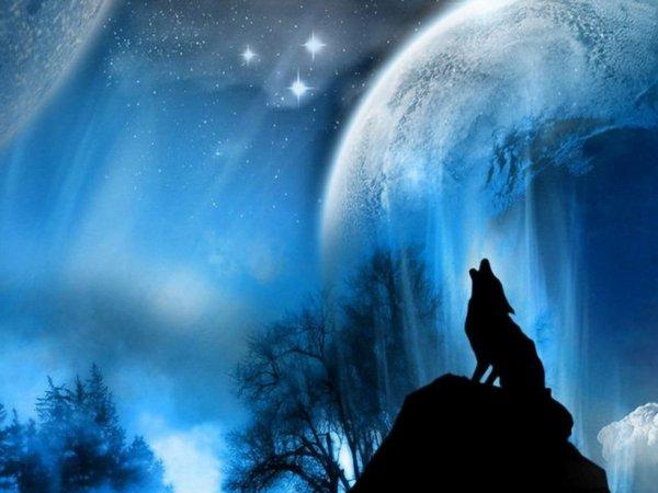 un loup et la lune