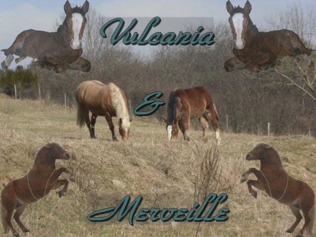 Bienvenue sur le blog de ma jument Merveille et ma pouliche Vulcania