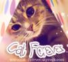 cat--forever