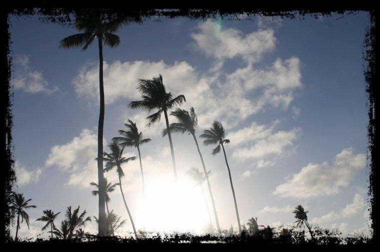 ........................... nageur de rêves oubliés......................