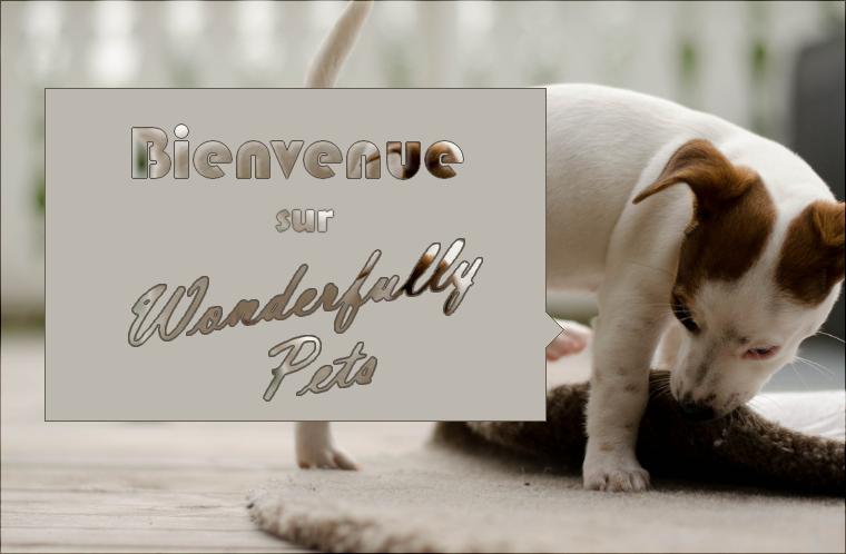 © Welcome on Wonderfully Pets. « Parce que la new génération qui aidera les animaux, ce sera nous ! »