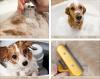 Fiche toileteur : © Les 10 étapes d'un toilletage basique. « Parce qu'ils le valent bien. »