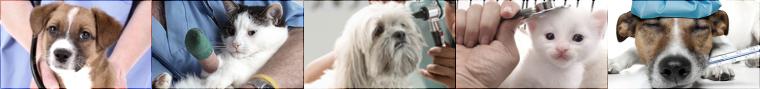 Fiche véto : © Le métier vétérinaire. «  Le souci constant de la dignité et de l'honneur de la profession. »
