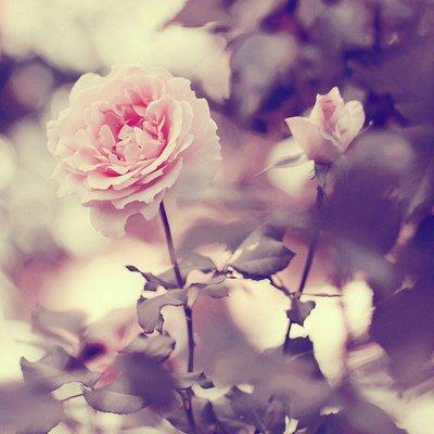 ) On prend, on aime, on oublie, on deteste, on se separt, et on recommance pour faire comme au commencement.
