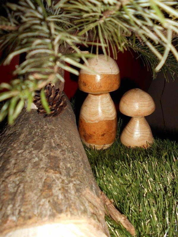 Mes champignons VENDU