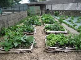 le jardin bio en carrés
