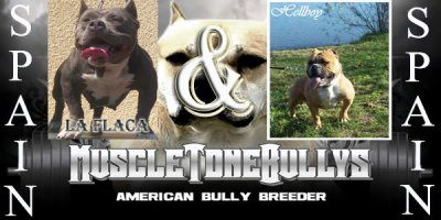 breeding : pups for sale !!!